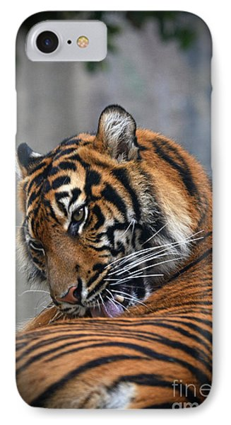 Portrait Of A Tiger IPhone Case