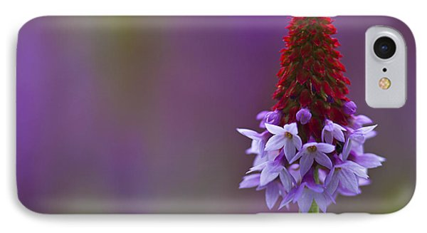 Primula Vialii  IPhone Case