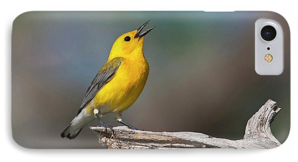 Prothonotary Warbler (prothonoteria IPhone Case