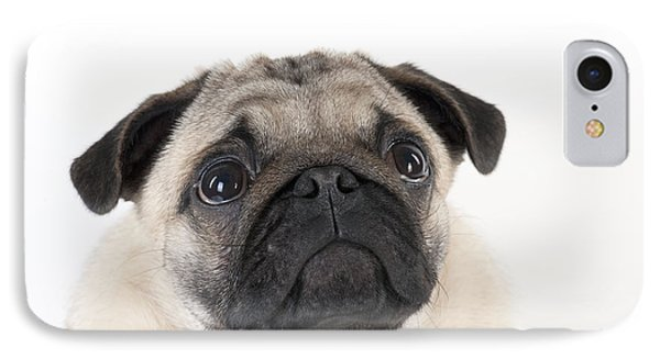 Pug Puppy IPhone Case by John Daniels