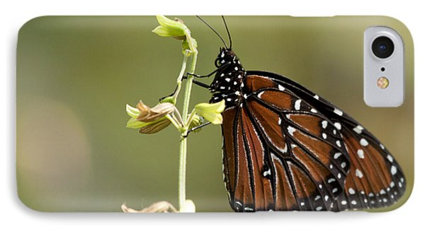 IPhone Case featuring the photograph Queen Butterfly by Meg Rousher