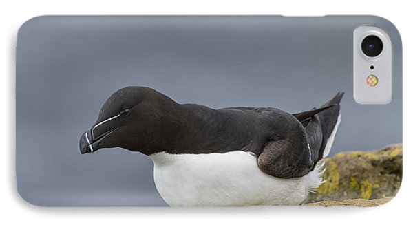 Razorbill IPhone 7 Case