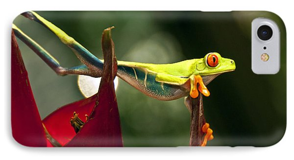 IPhone Case featuring the photograph Red Eyed Tree Frog 1 by Jialin Nie Cox WorldViews
