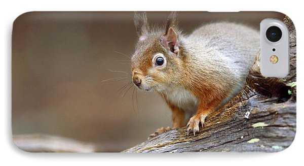 Red Squirrel IPhone Case by Colin Varndell