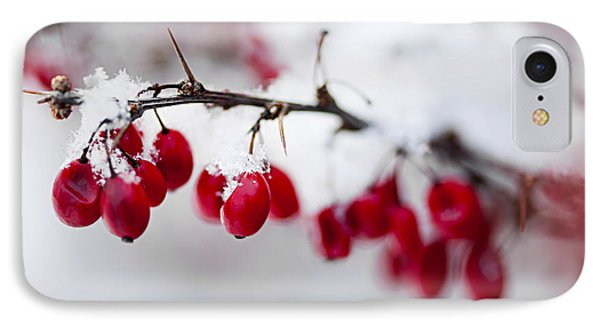 Red Winter Berries Under Snow IPhone Case