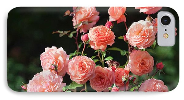 Rosa 'louise Clements' Flowers IPhone Case by Maria Mosolova