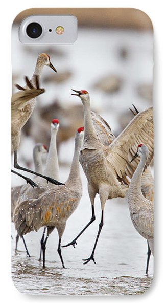 Sandhill Cranes Dancing On The Platte IPhone Case by Chuck Haney