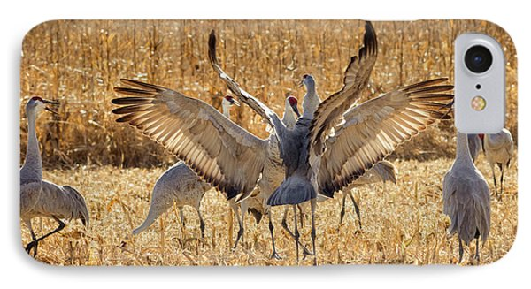 Sandhill Cranes In The Corn Fields IPhone Case by Maresa Pryor