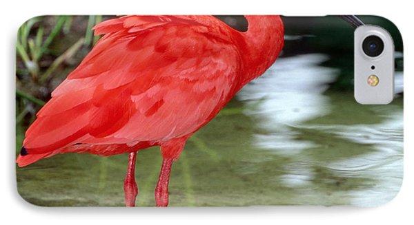 Scarlet Ibis Phone Case by Millard H Sharp