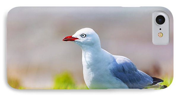 Seagull Phone Case by MotHaiBaPhoto Prints