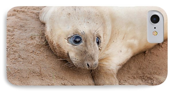 Seal Pup IPhone Case