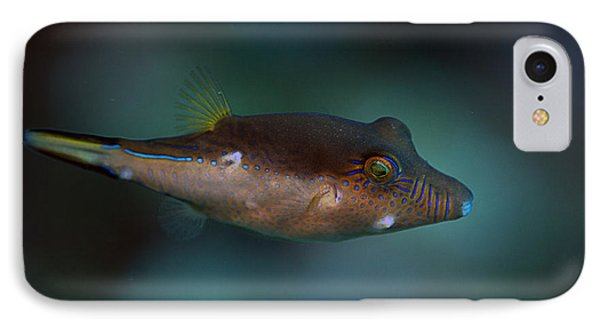 Sharpnose Puffer IPhone Case by JT Lewis