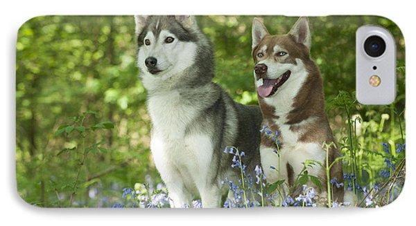 Siberian Huskies IPhone Case by John Daniels