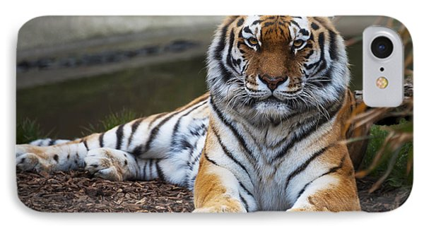 Siberian Tiger Phone Case by Svetlana Sewell