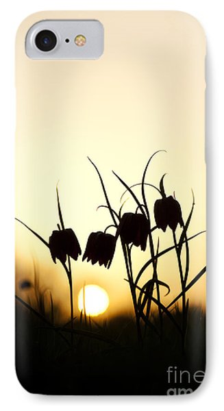 Snakes Head Fritillary Flowers At Sunset IPhone Case