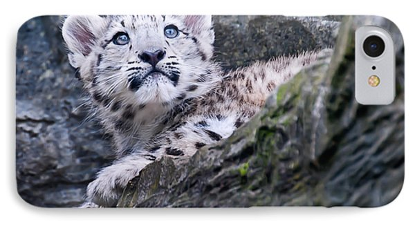 Snow Leopard Cub IPhone Case by Chris Boulton