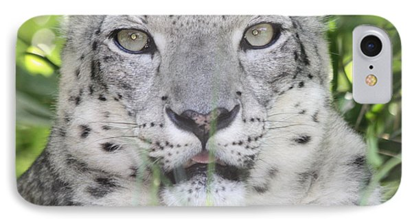 Snow Leopard IPhone Case by John Telfer
