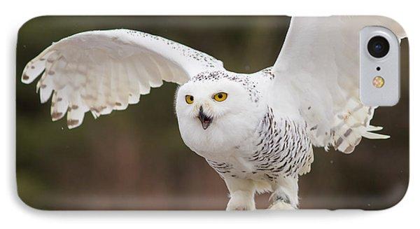 Snowy Owl IPhone Case by Les Palenik