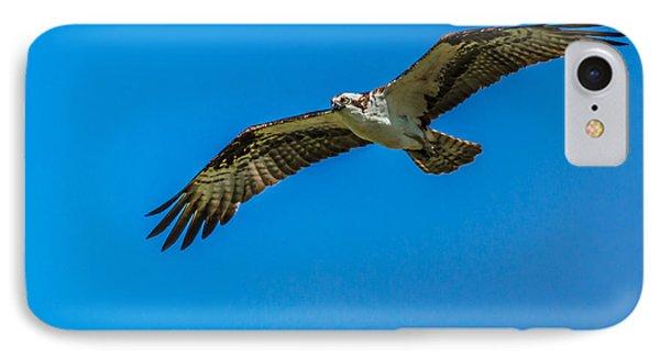 Soaring Osprey IPhone Case