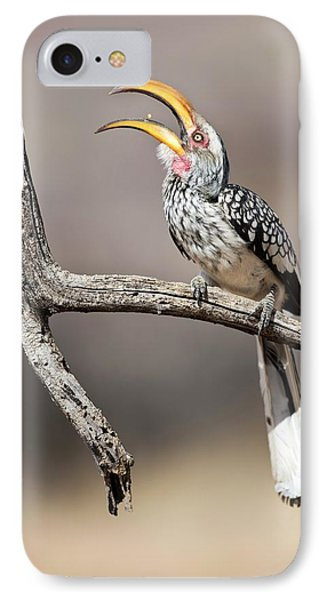 Hornbill iPhone 7 Case - Southern Yellow-billed Hornbill by Tony Camacho
