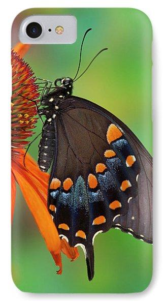 Spicebush Swallowtail, Papilio Troilus IPhone Case by Darrell Gulin