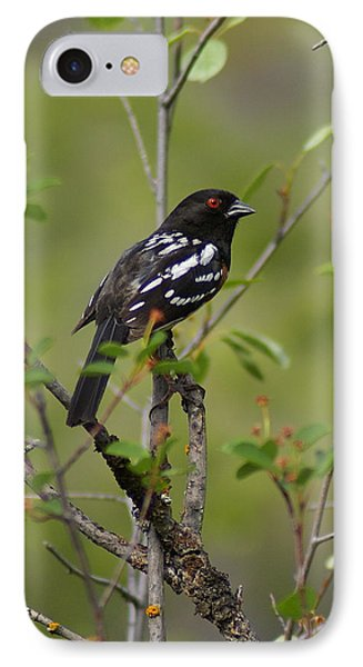 Spotted Towhee IPhone Case by Ben Upham III