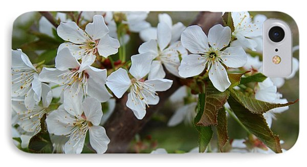 IPhone Case featuring the photograph Spring Blossoms by Lynn Hopwood