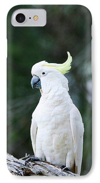 Cockatoo iPhone 7 Case - Sulfur-crested Cockatoo (cacatua by Martin Zwick
