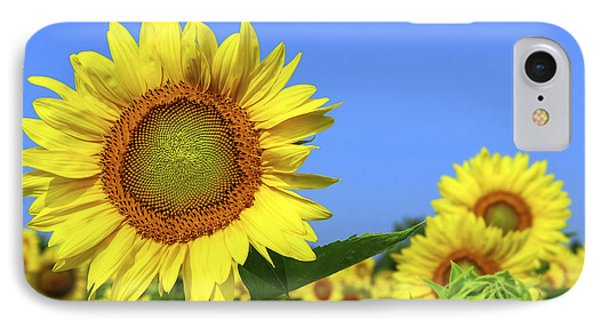 Sunflower Field IPhone Case by Elena Elisseeva