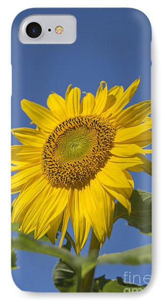 Sunny Day Phone Case by Alana Ranney