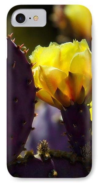That Golden Glow  Phone Case by Saija  Lehtonen