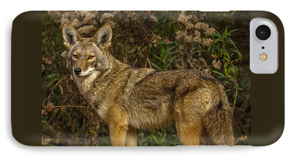 The Coyote IPhone Case by Ernie Echols