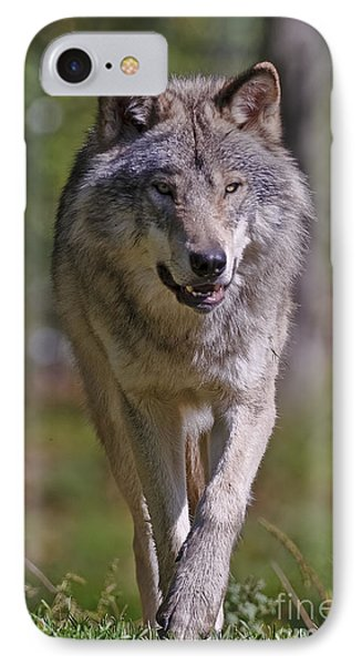 IPhone Case featuring the photograph Timber Wolf  by Wolves Only