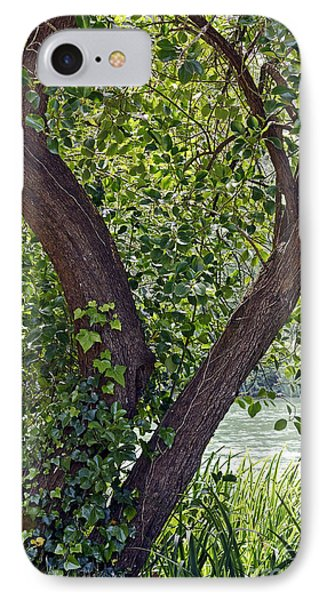 IPhone Case featuring the photograph Tree At Stow Lake by Kate Brown