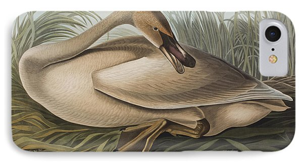Trumpeter Swan IPhone Case by John James Audubon