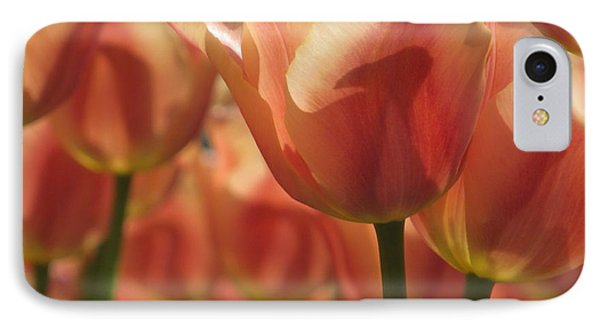 Tulips In Spring IPhone Case by Alfred Ng