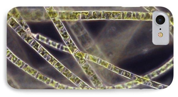 Ulothrix Sp. Algae, Lm Phone Case by David M. Phillips