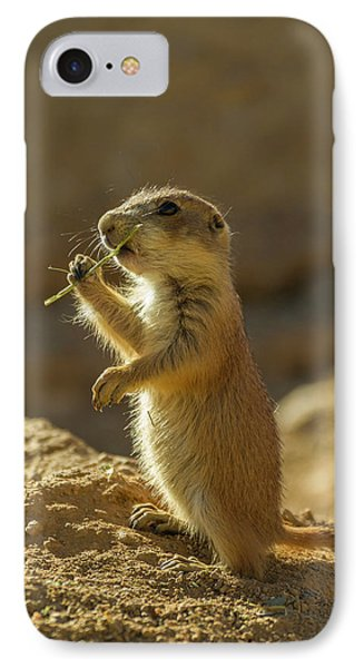 Usa, Arizona-sonora Desert Museum IPhone Case