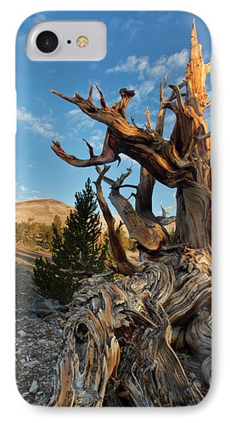 Usa, California, Inyo National Forest IPhone Case by Jaynes Gallery