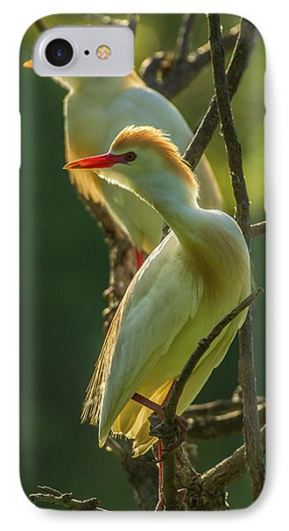 Usa, Florida, Gatorland IPhone Case by Jaynes Gallery