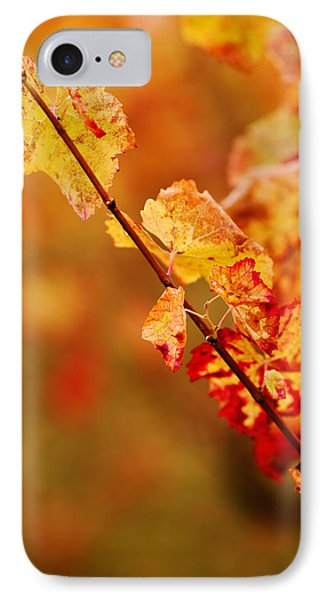 Vineyard In Autumn, Gaillac, Tarn IPhone Case by Panoramic Images