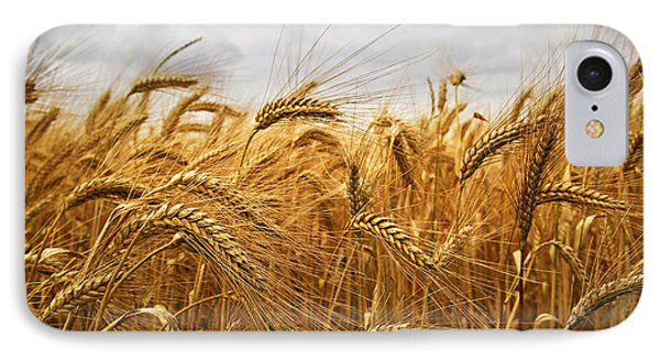 Wheat IPhone 7 Case by Elena Elisseeva