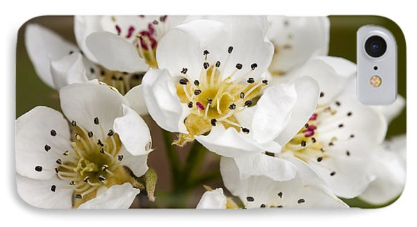 Beautiful White Spring Blossom IPhone Case