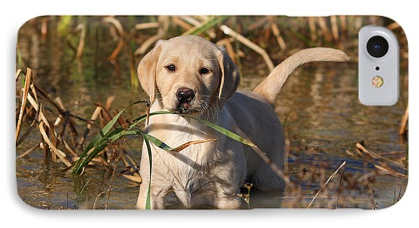 Yellow Labrador Retriever Puppy Standing In Water IPhone Case by Dog Photos