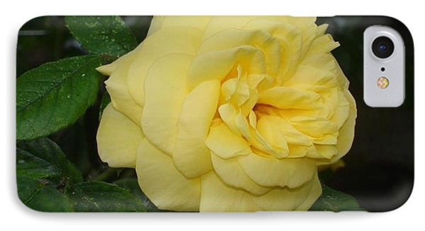 IPhone Case featuring the photograph Yellow Rose  by Katy Mei