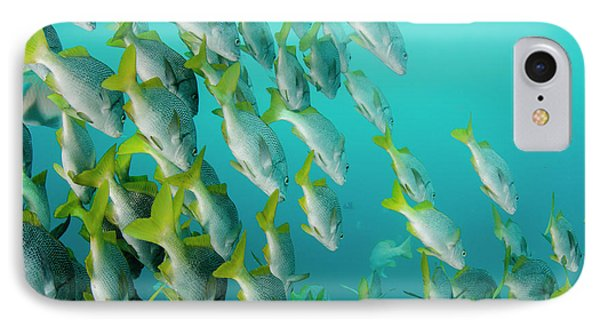 Yellowtail Grunt (anisotremus IPhone Case by Pete Oxford