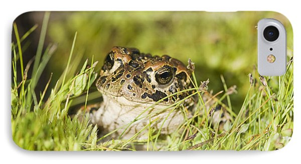 Yosemite Toad IPhone Case
