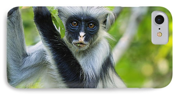 Zanzibar Red Colobus In Tree Jozani IPhone Case by Thomas Marent