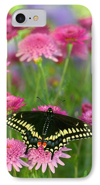 Black Swallowtail Butterfly, Papilio IPhone Case by Darrell Gulin
