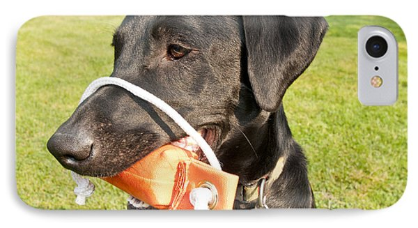 Black Labrador Retriever IPhone Case by William H. Mullins